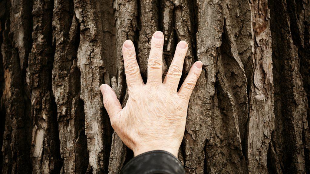 Erneuerbare Energien aus Holz gewinnen